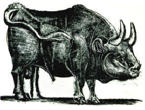 Picasso's Bull #03